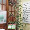 Прокопьевский драмтеатр: вместе вырастим добро!