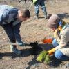 АО «СУЭК-Кузбасс» высадит 14,5 тысяч деревьев