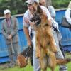Киселевск: выставка собак «Кузбасские звезды»