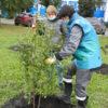 ТАЛТЭК обустраивает свой зеленый двор